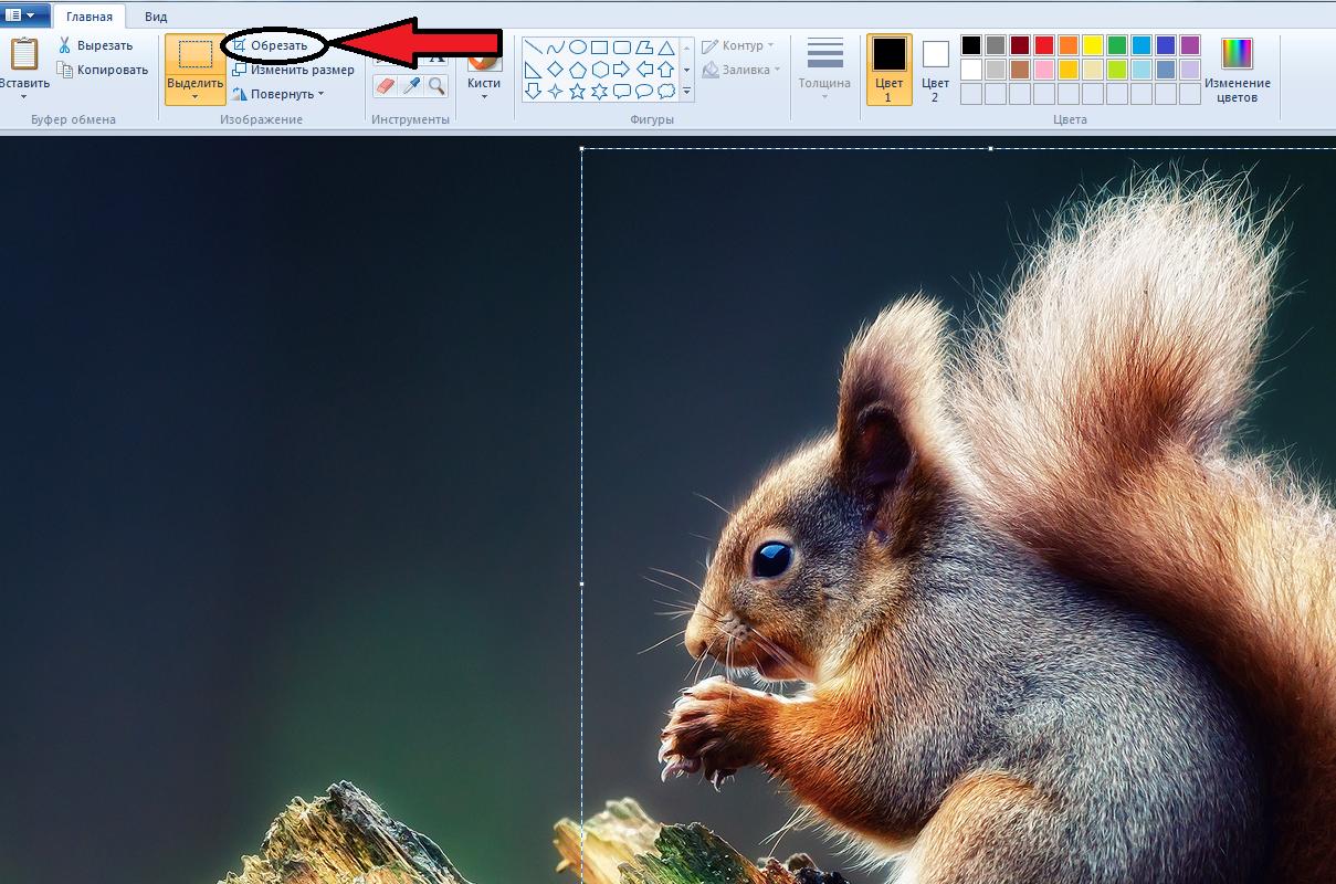 Як обрізати фото в Paint — детальна і зрозуміла інструкція